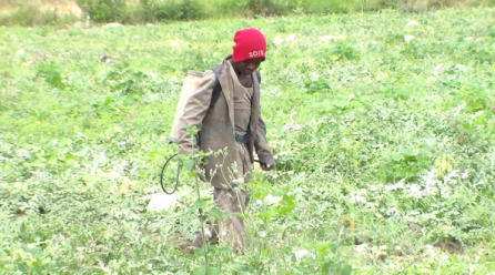 Musyenene two village residents in Kasese are likely to face hunger & famine.