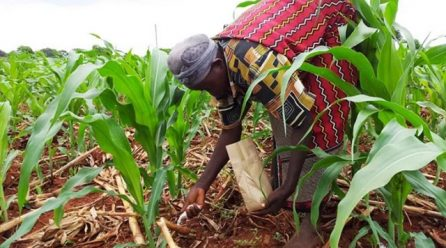 Poor extension services affecting farmers in Kasese.